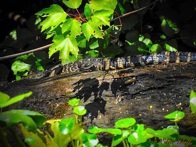 Practicing My Alligatorness Poster