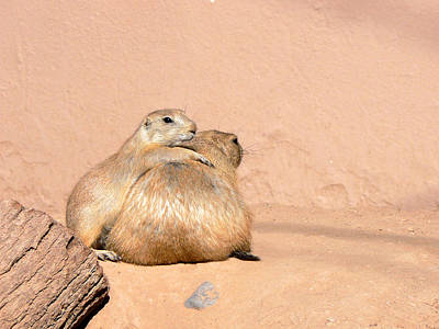 Prairie Dog Friends Poster