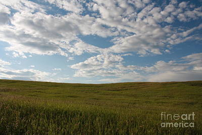 Poster featuring the photograph Prairie Field by Wilko Van de Kamp