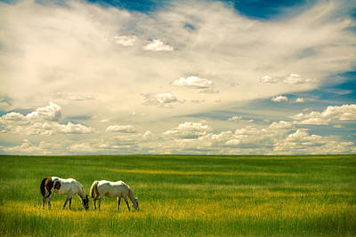 Prairie Horses Poster