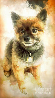 Precious Pomeranian Poster by Tina LeCour