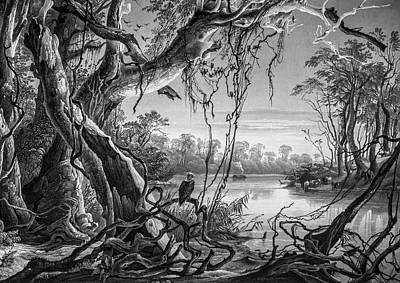 Preditor In Paradise Poster by Douglas Barnett