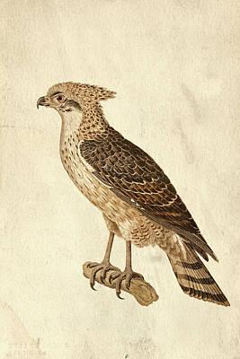 Preditor In Sepia Poster by Douglas Barnett