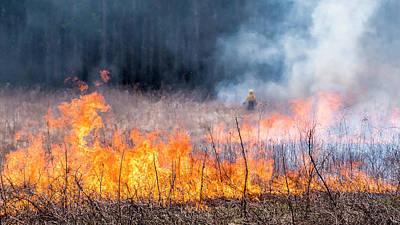 Prescribed Burn - Uw Arboretum - Madison - Wisconsin Poster by Steven Ralser