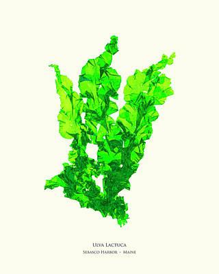 Pressed Seaweed Print, Ulva Lactuca, Sebasco Harbor, Maine. #30 Poster by John Ewen