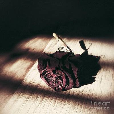 Pretty Dead Rose Resting In The Warm Sun Poster