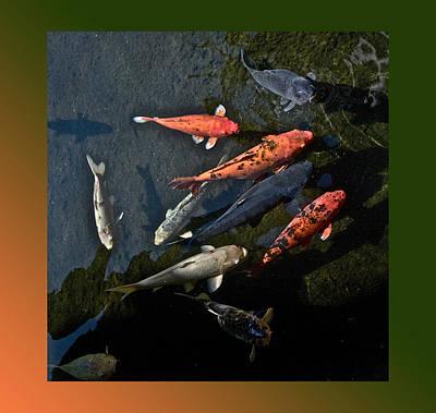 Pretty Fish Poster