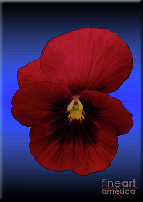 Poster featuring the photograph Pretty Pansy by Donna Brown