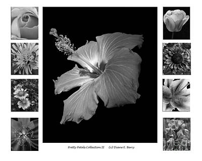 Poster featuring the photograph Pretty Petals Collection II by Diane E Berry