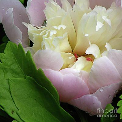 Pretty Petals Poster by Deborah Johnson