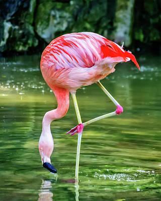 Pretty Pink Flamingo Poster