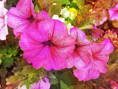 Pretty Pink Petunias Poster