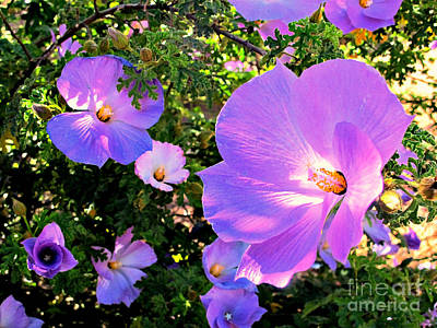 Pretty Purple Flowers Of Arizona Poster by Michaline  Bak