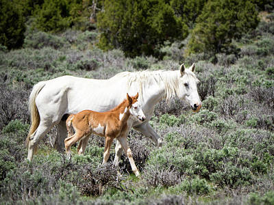 Poster featuring the photograph Pretty White Mustang Mare With Her New Foal - Sand  Wash Basin by Nadja Rider