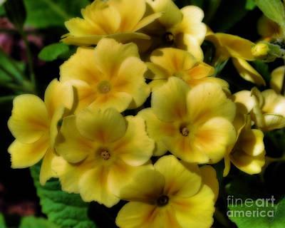 Pretty Yellow Primrose Poster by Smilin Eyes  Treasures