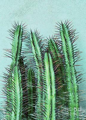 Prick Cactus Poster