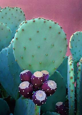 Prickly Pear - Cactus - Spineless Poster by Nikolyn McDonald