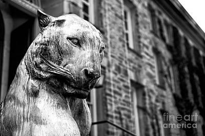 Princeton Tiger Portrait Poster