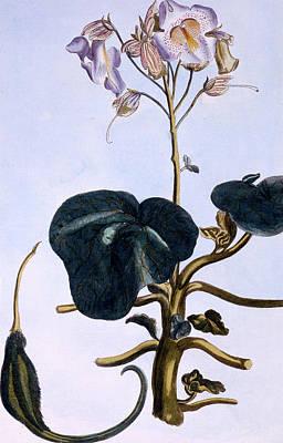 Proboscis Flower Poster by Pierre-Joseph Buchoz