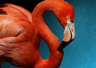 Profile Of An American Flamingo Poster