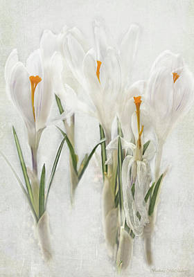 Promise Of Spring Crocus Poster by Barbara McMahon