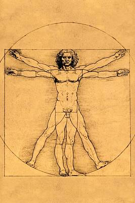 Proportions Of The Human Figure Poster
