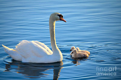 Proud Mother Poster by Deb Halloran