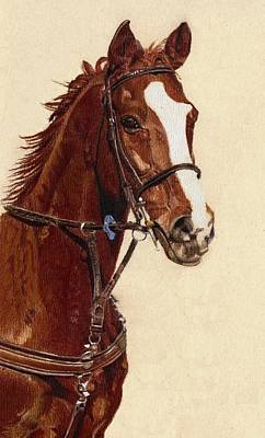Proud - Portrait Of A Thoroughbred Horse Poster by Patricia Barmatz