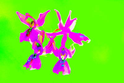 Green Provence Orchid  Poster