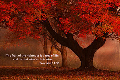 Poster featuring the photograph Proverbs 11 30 Scripture And Picture by Ken Smith