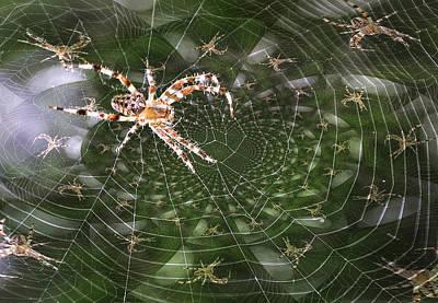 Psych Spider Poster by Rick DiGiammarino