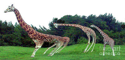 Poster featuring the digital art Psychedelic Giraffes by Merton Allen