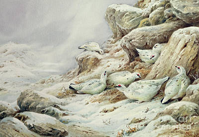 Ptarmigan In Snow Covered Landscape Poster by Carl Donner