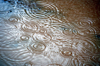 Poster featuring the photograph Puddle Patterns by Gwyn Newcombe