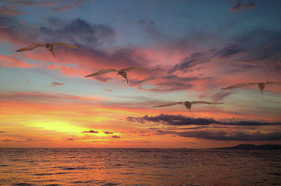 Puerto Vallarta Pelicans Poster