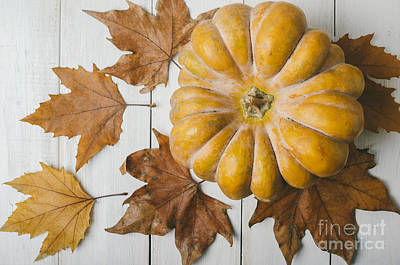Pumkin And Maple Leaves Poster by Jelena Jovanovic