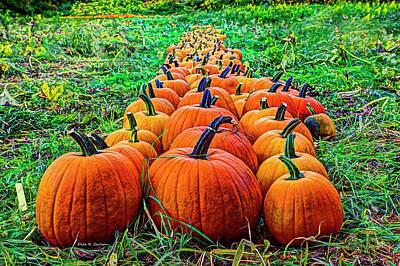 Pumpkin Patch Poster by Dale R Carlson