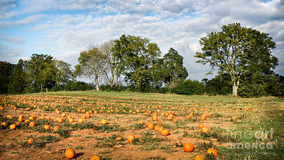 Poster featuring the photograph Pumpkin Patch by Todd Blanchard