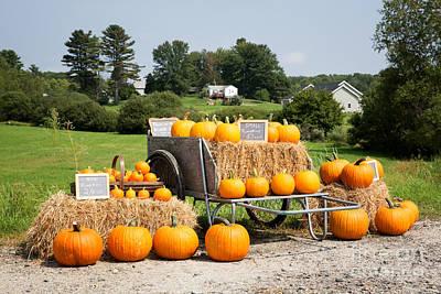 Pumpkin Sale Poster by Jane Rix