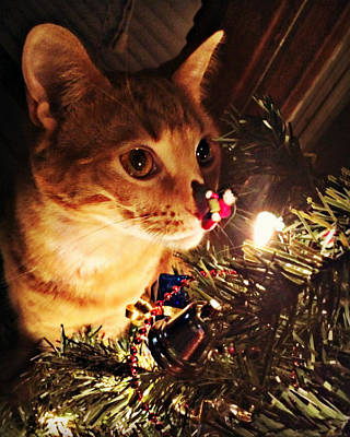Pumpkin's First Christmas Tree Poster by Kathy M Krause