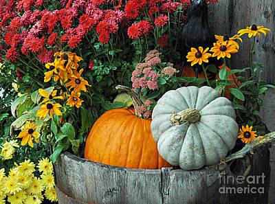 Pumpkins In Vermont Poster
