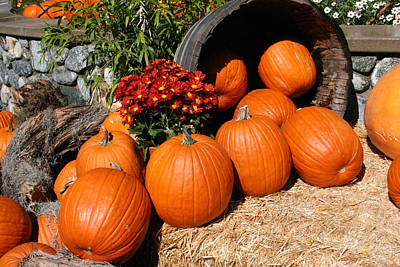 Pumpkins- Photograph By Linda Woods Poster