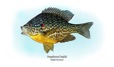 Pumpkinseed Sunfish Poster by Ralph Martens
