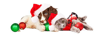 Puppy And Kitten Laying With Christmas Ornaments Poster