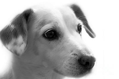 Puppy - Monochrome 4 Poster