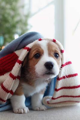 Puppy Sitting Under Blanket Poster
