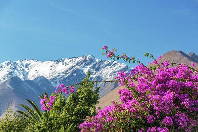Purple Bougainvillea And Mountains Poster by Jess Kraft