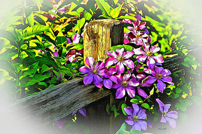 Purple Clematis On Split Rail Fence Poster