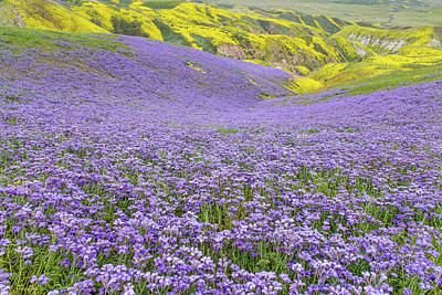 Poster featuring the photograph Purple  Covered Hillside by Marc Crumpler