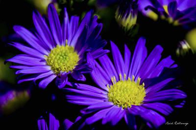 Purple Daisy Flower Art Poster